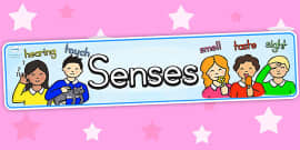 Australia - Five Senses Display Banner