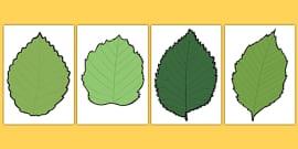 Blank Leaf Templates