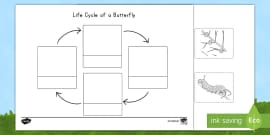 * NEW * Life Cycle of a Butterfly Cutting Skills Activity Sheet