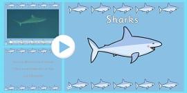 Under the Sea Shark Video PowerPoint