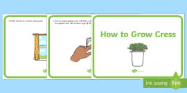 * NEW * How to Grow Cress Display Posters