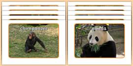 Jungle & Rainforest Animals Display Photos