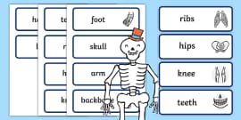Body Part Word Cards to Support Teaching on Funnybones