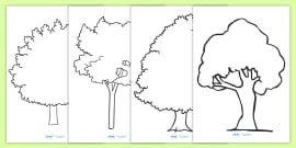 Tree Outline Activity Sheets