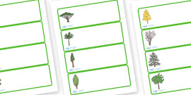 Editable Drawer - Peg - Name Labels (Trees)