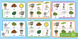 Plants and Growth Bingo and Lotto Game