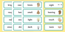 Senses Topic Word Cards