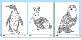 Polar Animals Mindfulness Colouring Sheets