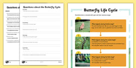 Butterfly Life Cycle Differentiated Reading Comprehension Activity