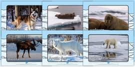 Arctic Animals Display Photos
