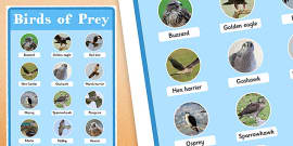 UK Birds of Prey Display Poster