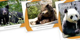 Bears Display Photos