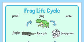 Frog Life Cycle Word Mat (Minibeasts)