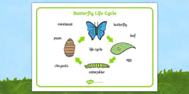 Butterfly Life Cycle Word Mat (Minibeasts)