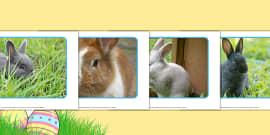 Rabbit Display Posters