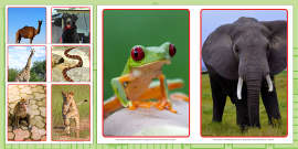 Animal Display Photos A5 to Support Teaching on Dear Zoo