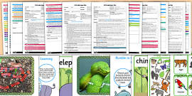 EYFS Adult Input Planning and Resource Pack to Support Teaching on Rumble in the Jungle