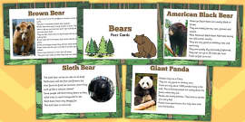 Bear Fact Cards