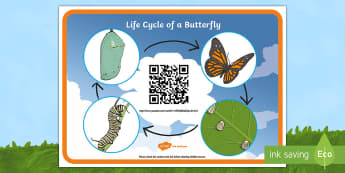 Life Cycle of a Butterfly Code Hunter - USA Early Childhood Science: Life Cycles, butterfly lifecycle, QR code lifecycle, Pre-K lifecycles.