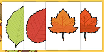 Autumn Leaves A4 Cut Outs - autumn, leaves, a4, cut outs, season