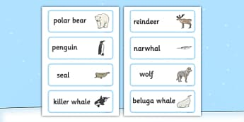 Polar Animals Word Cards - Polar, Animal, Ice, Word, Cards
