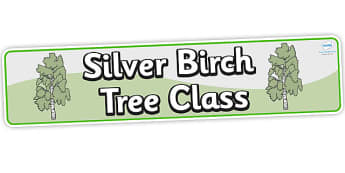 Birch Tree Themed Classroom Banner Silver Birch - displays, trees
