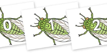 Numbers 0-31 on Cicada - 0-31, foundation stage numeracy, Number recognition, Number flashcards, counting, number frieze, Display numbers, number posters