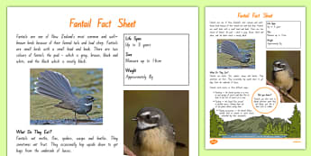 New Zealand Native Birds Fantail Fact Sheet - nz, new zealand, Native, birds, animals