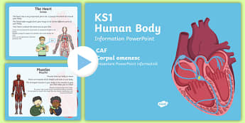 KS1 Human Body Information PowerPoint English/Romanain - All About Me,Ourselves, My Body, human, skeleton, organs, brain, lungs, heart, breathing, pp, ppt,Ro