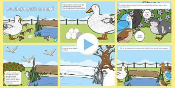 L'histoire du vilain petit canard PowerPoint