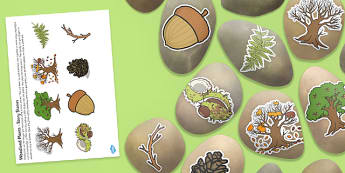 Woodland Plants Story Stone Image Cut Outs - woodland plants, story stone, image, cut outs