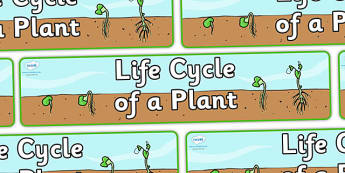 Life Cycle of a Plant Display Banner - Plant life cycle, lifecycle, poster, display, plant, seed, flower, stem, knowledge and understanding of the world