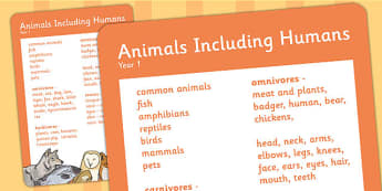 Year 1 Animals Including Humans Scientific Vocabulary Poster