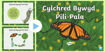 Pŵerbwynt Cylchred Bywyd Pili-Pala - Bywyd Newydd, Fferm, farm, new life, life cycles, cylchoedd bywyd, Fi fy hun a phethau byw eraill, G