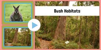 Bush Habitat Photo PowerPoint - australia, Science, Year 1, Habitats, Australian Curriculum, Bush, Living, Living Adventure, Good to Grow, Ready Set Grow, Life on Earth, Environment, Living Things, Animals, Plants, Photos, Photographs, PowerPoint