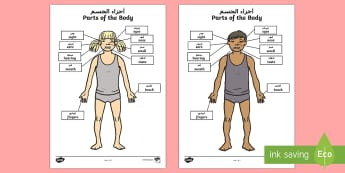 Parts of the Body Senses Labelling Activity Sheet Arabic/English - Parts of the Body Senses Labelling Activity Sheet - worksheet, body, ourselves , sences, sesnses, ou