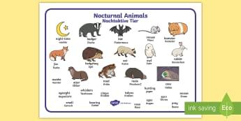 Nocturnal Animals Word Mat English/German - nocturnal, night, EAL, German,German-translation