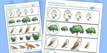 Owl Size Matching Worksheet - owl, size matching, worksheet