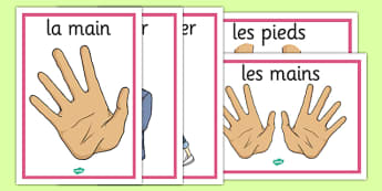 French Actions Display Posters - french, display posters, actions