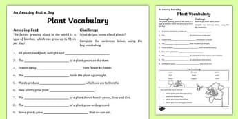 Plant Vocabulary Activity Sheet, worksheet
