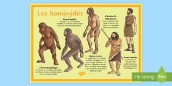 Poster : Les hominidés - préhistoire, prehistory, le paléolithique, âge de pierre, stone age, hominidés, hommes préhisto