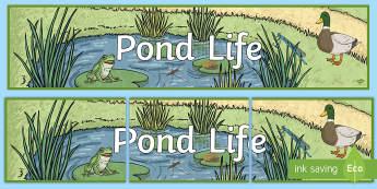 Pond Life Display Banner - Life Cycle of a Frog Display Banner - header, display, life cycles, abnner, frog, pond, fish, life p