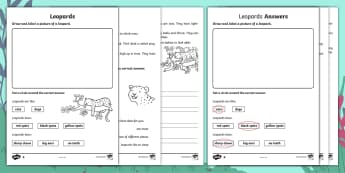 Leopards Differentiated Activity Sheets - Children's Books, ask, answer, leopards, spots, prey, hunt, nocturnal, solitary, alone, cubs, find,