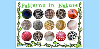 Patterns in Nature Display Poster - patterns in nature, nature, display poster, poster, posters for display, classroom display, classroom posters, display