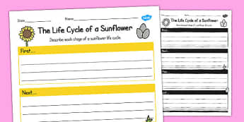 The Life Cycle of a Sunflower Writing Frame - writing frame