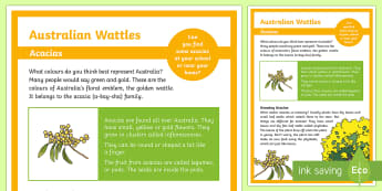 Wattle Information Display Poster - Australian Curriculum Biological sciences, wattle, acacia, Australian plants, Australian flora, Aust