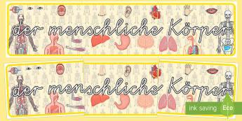 Der menschliche Körper Banner für die Klassenraumgestaltung - Unser Körper, der menschliche Körper, Körper Banner, Körper Klassenraumgestaltung,German.