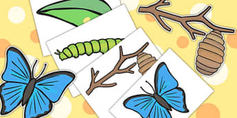 Butterfly Life Cycle Cut-Outs - life cycles, cutouts, display