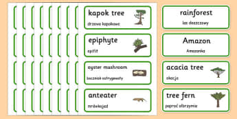 Rainforest Word Cards Polish Translation - rainforest, amazong, plants, trees, vocabulary, polish, poland, eal, rain, forest, habitat, environment