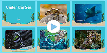 Under the Sea Photo PowerPoint - under the sea, under the sea powerpoint, under the sea photos, under the sea images, under the sea images powerpoint
